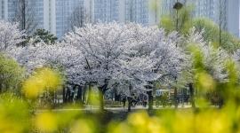 공원의 봄