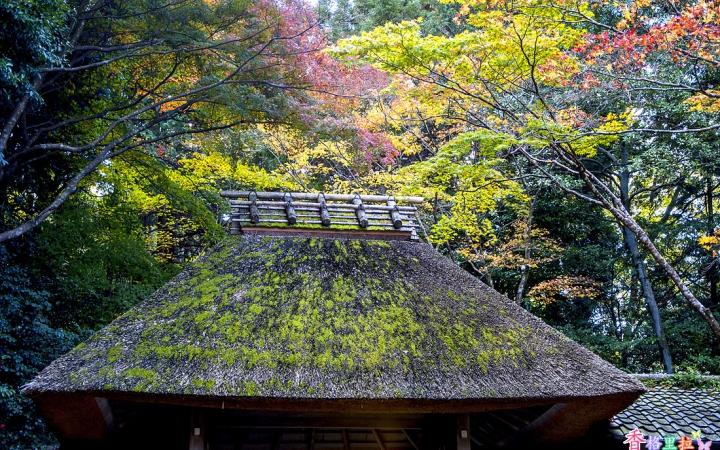 지붕위의 가을
