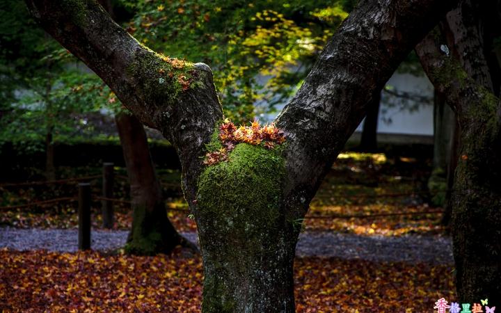 이끼에 앉은 가을